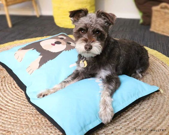 customized dog beds