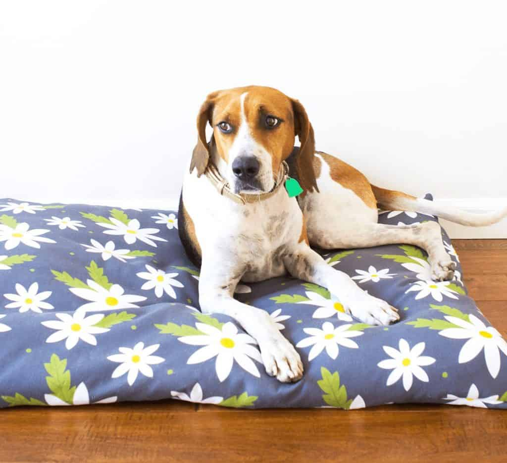 diy custom dog beds