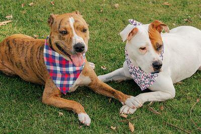 Custom Products Personalized Custom Dog Bandanas