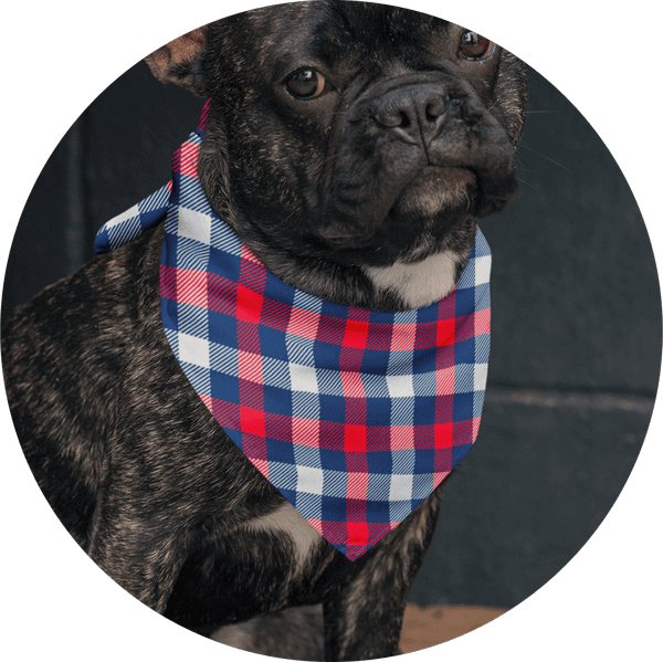 Personalized Custom Dog Bandanas Sell Online